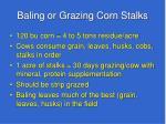 baling or grazing corn stalks