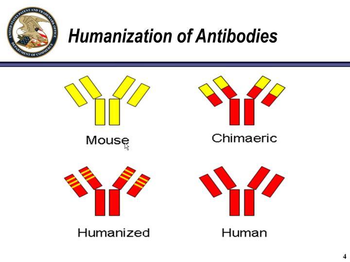 Humanization of Antibodies