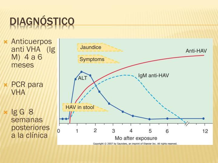 Anticuerpos anti VHA   (