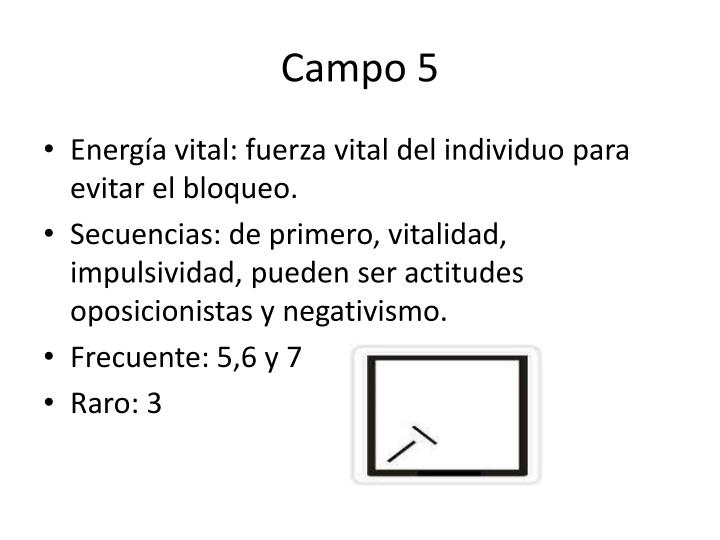 Campo 5