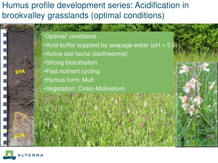 Humus profile development series: Acidification in brookvalley grasslands (optimal conditions)