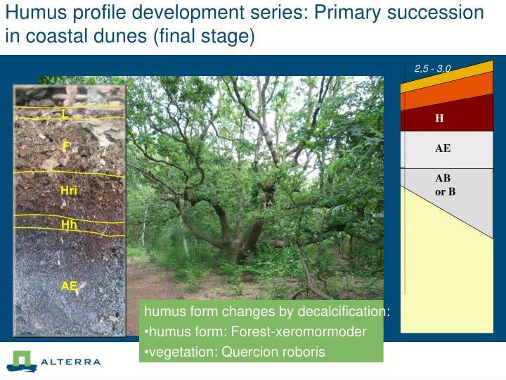 Humus profile development series: Primary succession in coastal dunes (final stage)