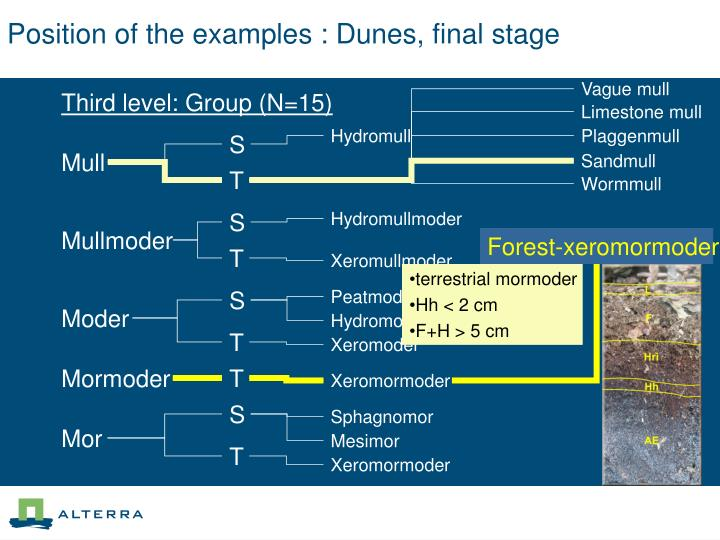 Position of the examples : Dunes, final stage
