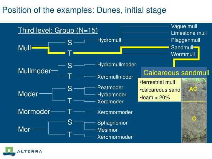 Position of the examples: Dunes, initial stage