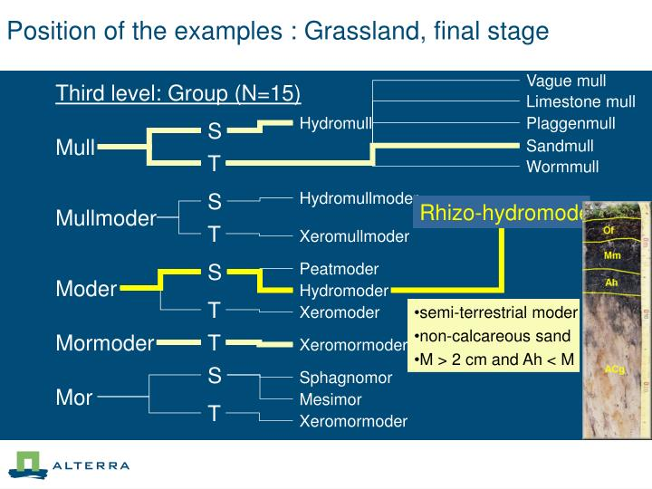 Position of the examples : Grassland, final stage