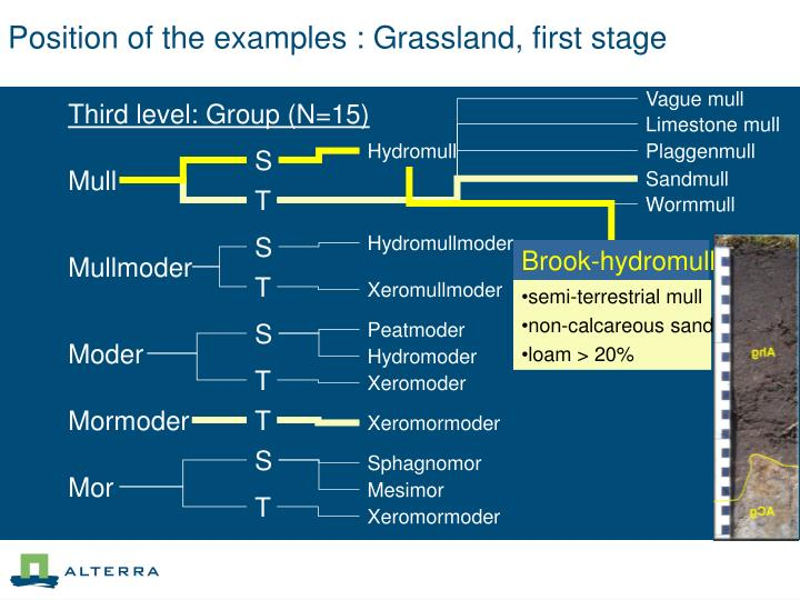 Position of the examples : Grassland, first stage