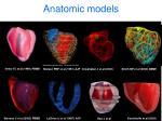 anatomic models