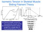 isometric tension in skeletal muscle sliding filament theory