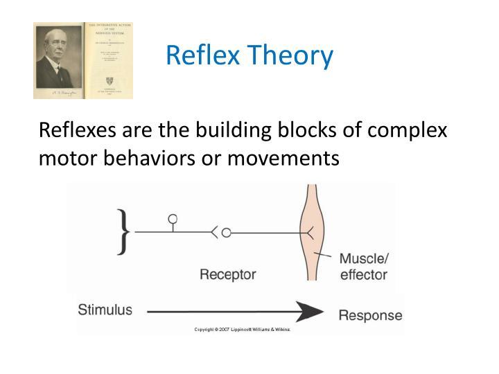 Reflex Theory