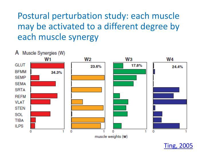 Postural perturbation study: each
