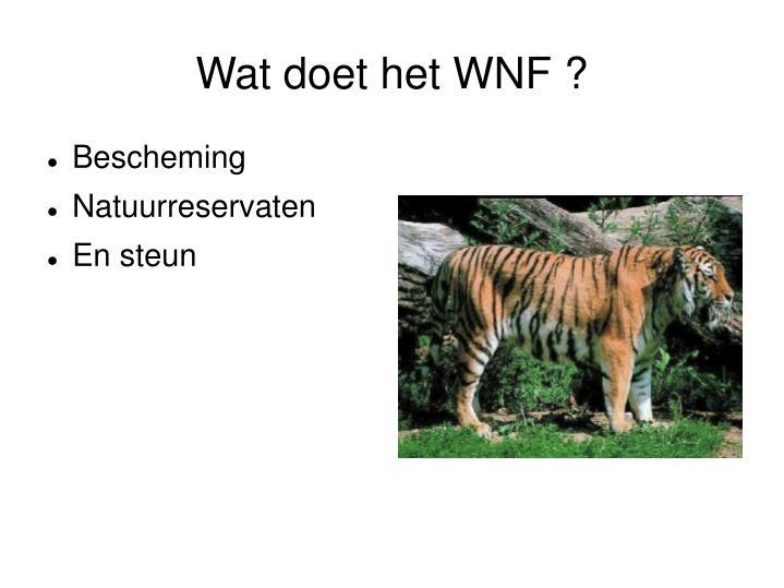Wat doet het WNF ?