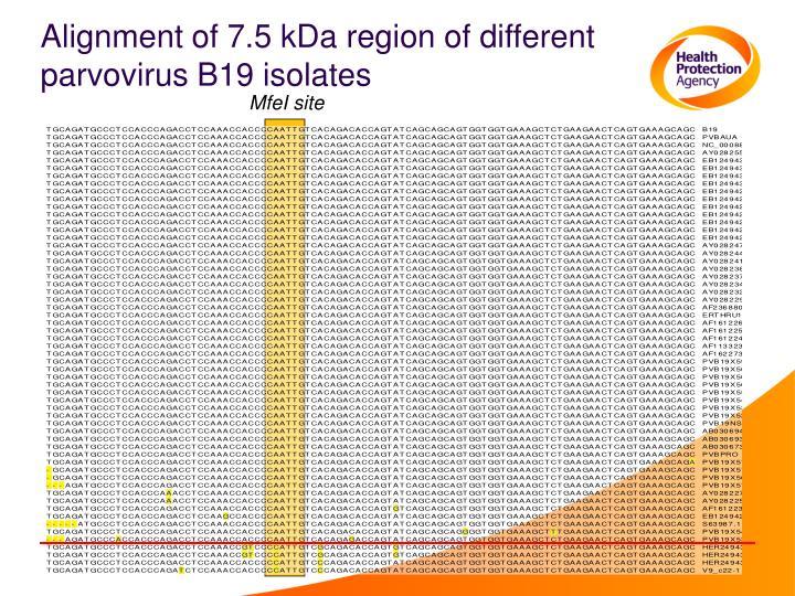Alignment of 7.5 kDa region of different