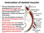 i nnervation of skeletal muscles