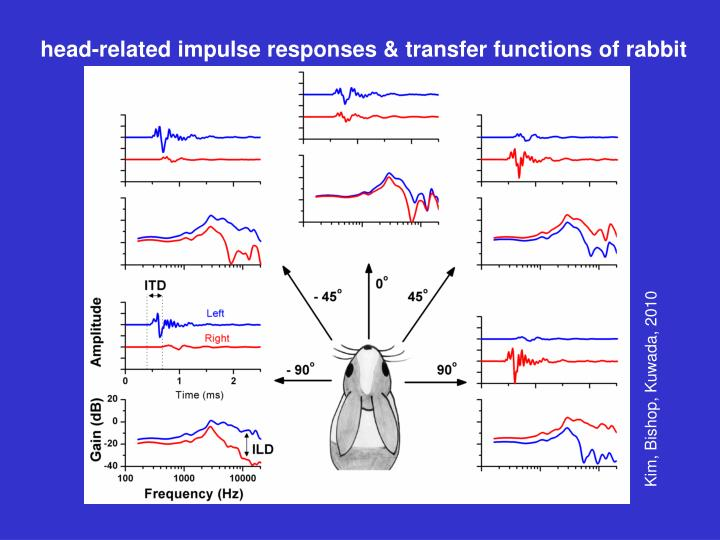 head-related impulse responses & transfer functions of rabbit
