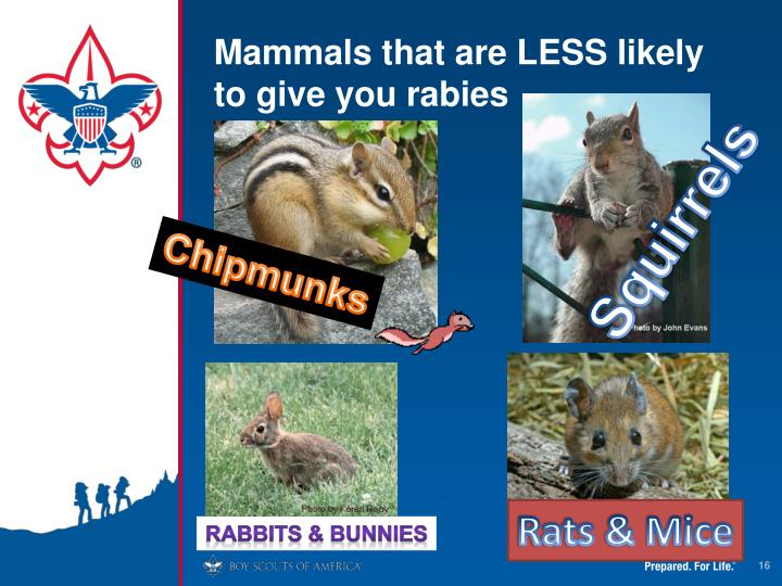 Mammals that are LESS likely to give you rabies