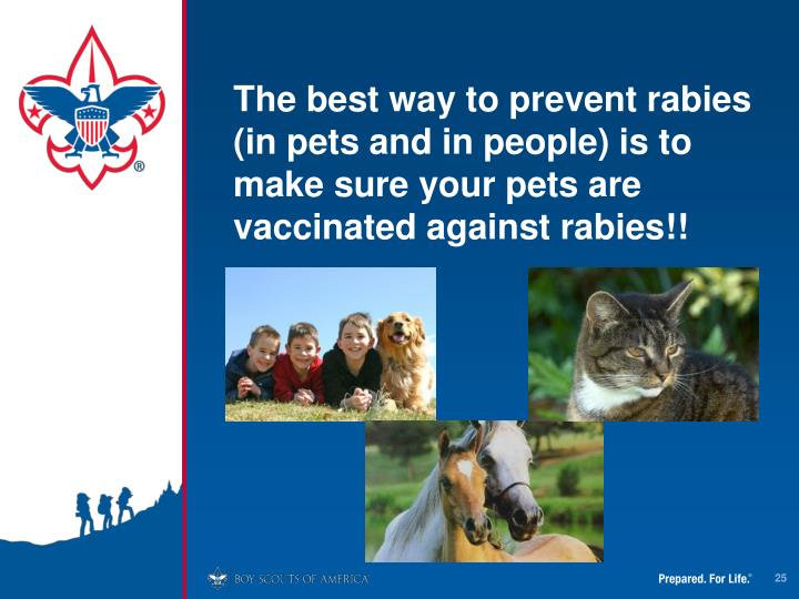 The best way to prevent rabies (in pets and in people) is to make sure your pets are vaccinated against rabies!!