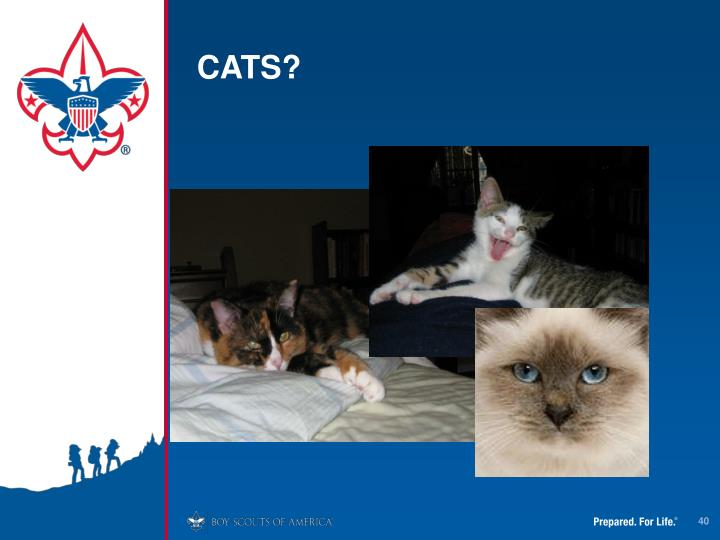 CATS?