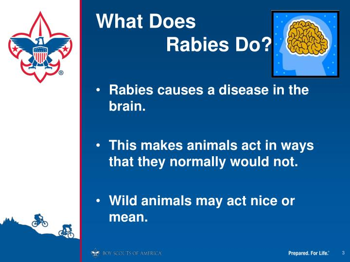 What does rabies do