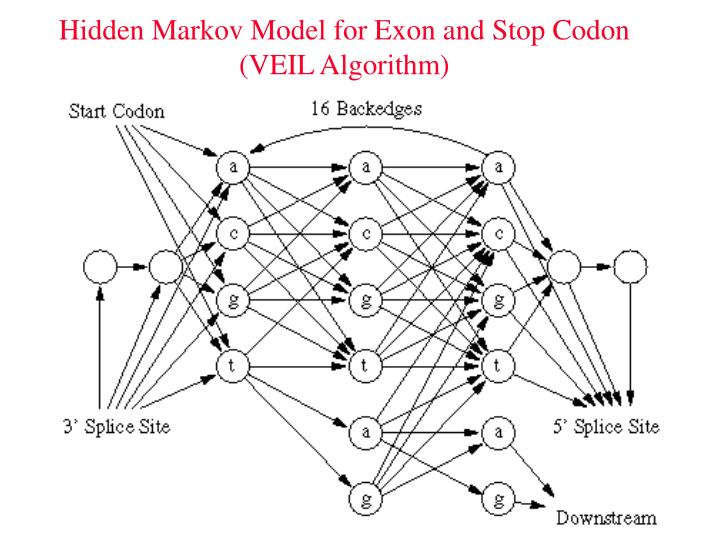 Hidden Markov Model for Exon and Stop Codon (VEIL Algorithm)