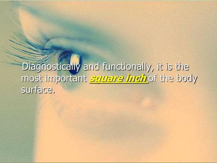 Diagnostically and functionally, it is the most important