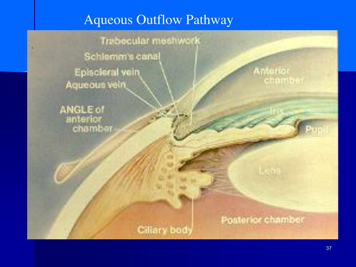 Aqueous Outflow Pathway