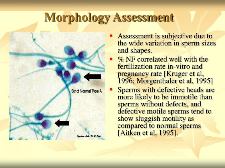 Morphology Assessment