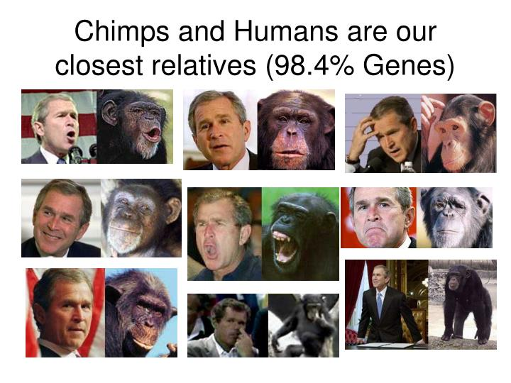 Chimps and Humans are our closest relatives (98.4% Genes)