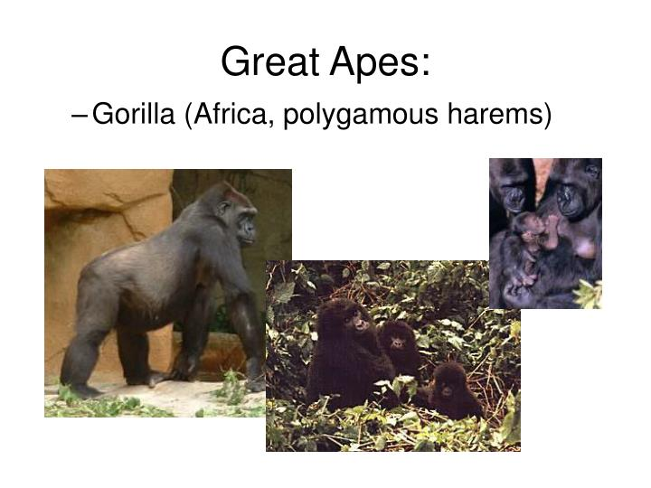 Great Apes: