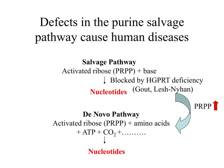 Defects in the purine salvage pathway cause human diseases