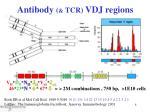 antibody tcr vdj regions