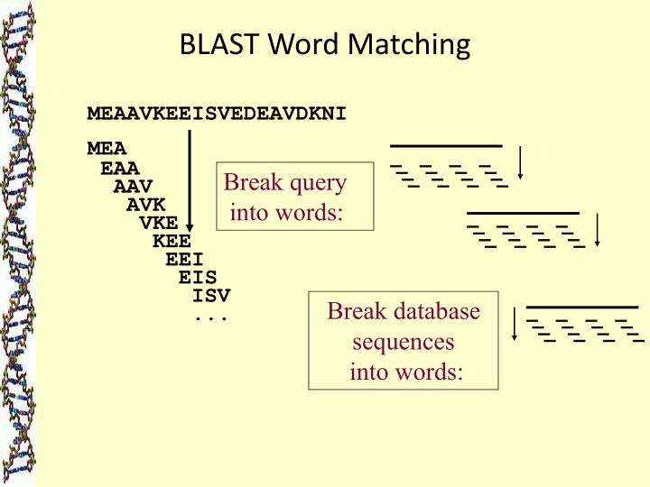 BLAST Word Matching
