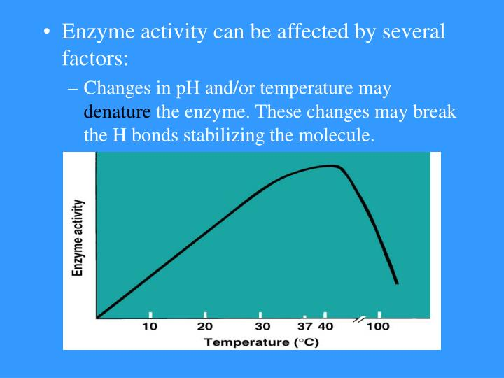 Enzyme activity can be affected by several factors: