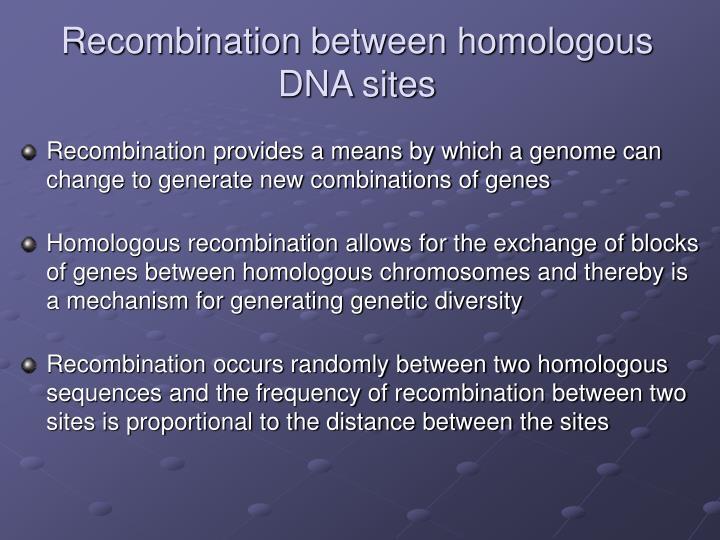 Recombination between homologous DNA sites
