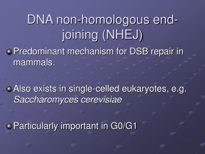 DNA non-homologous end-joining (NHEJ)