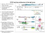 ctcf and the architecture of the igh locus
