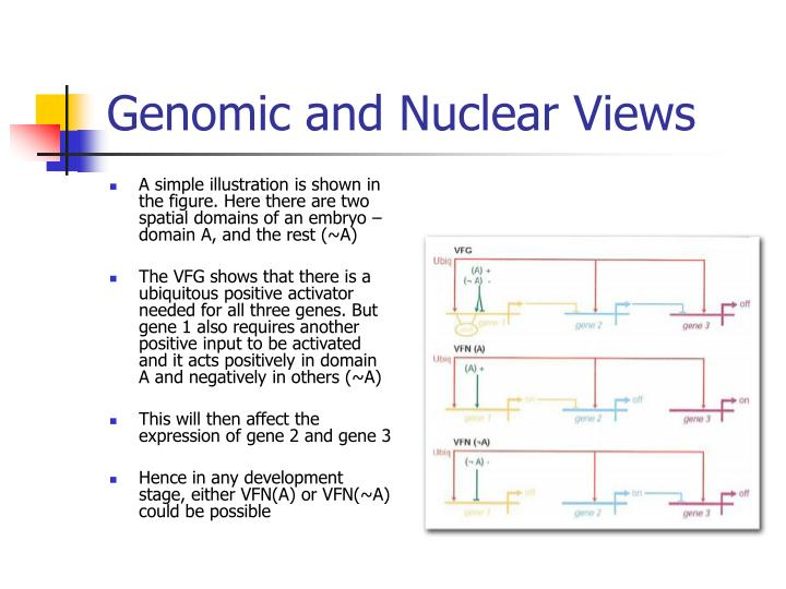 Genomic and Nuclear Views