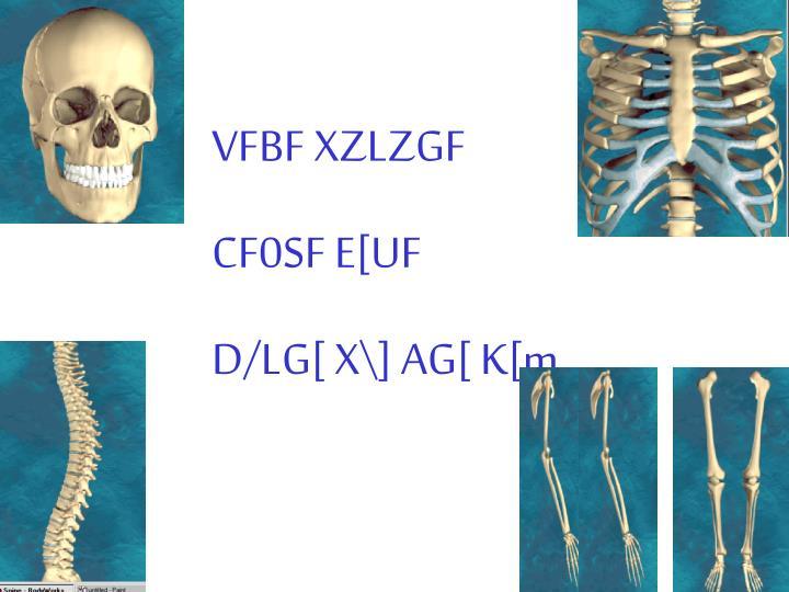 VFBF XZLZGF