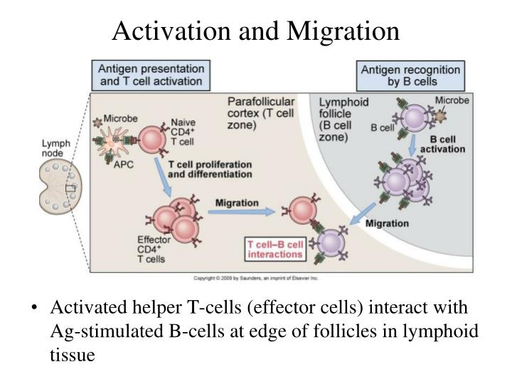 Activation and Migration