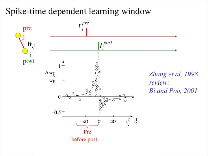 Spike-time dependent learning window