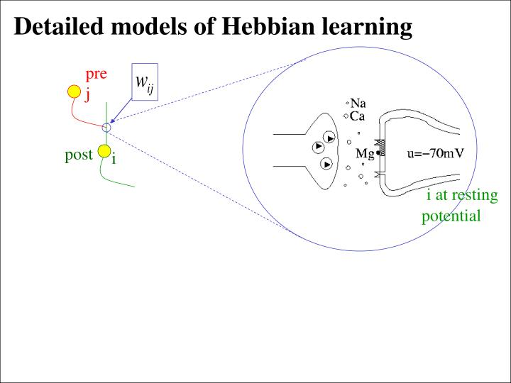 Detailed models of Hebbian learning