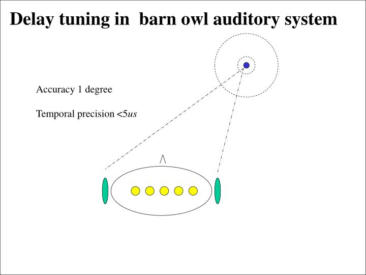 Delay tuning in  barn owl auditory system