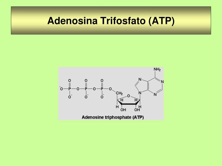 Adenosina Trifosfato (ATP)