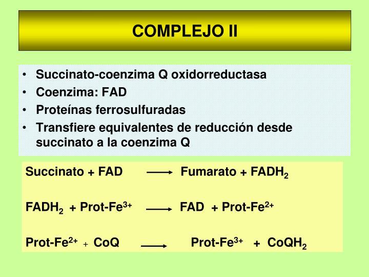 COMPLEJO II
