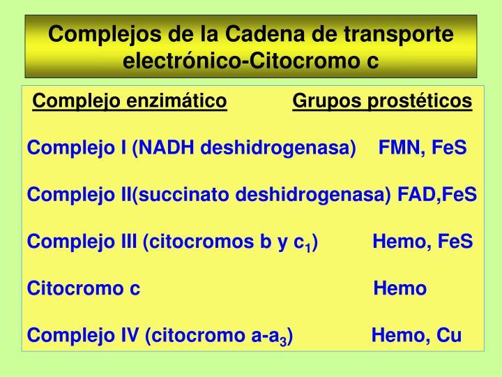 Complejos de la Cadena de transporte electrónico-Citocromo c