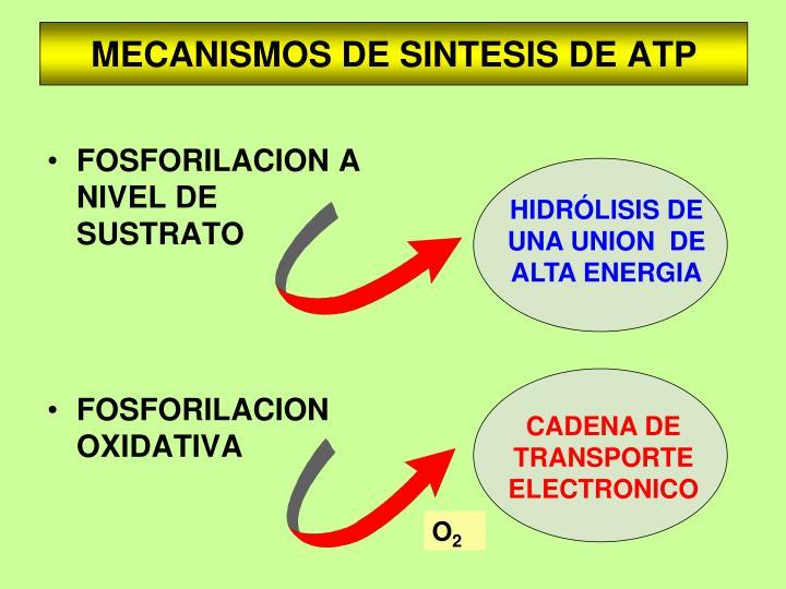 HIDRÓLISIS DE UNA UNION  DE ALTA ENERGIA