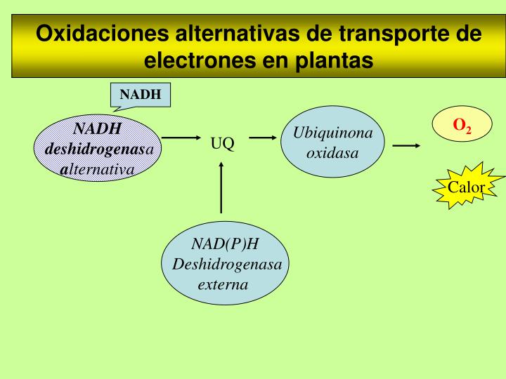 Oxidaciones alternativas de transporte de electrones en plantas