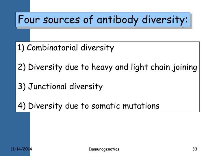 Four sources of antibody diversity: