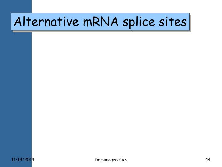 Alternative mRNA splice sites