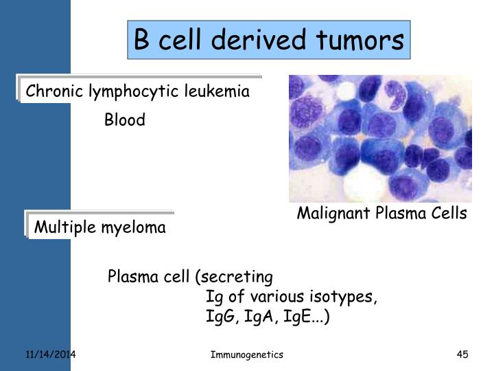 B cell derived tumors