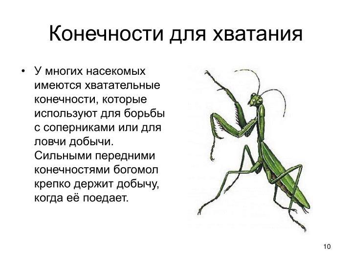 У многих насекомых имеются хватательные конечности, которые используют для борьбы с соперниками или для ловчи добычи. Сильными передними конечностями богомол крепко держит добычу, когда её поедает.